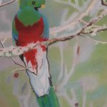 Pastel drawing of a colorful tropical bird.