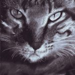 Black and white charcoal drawing of a cat.