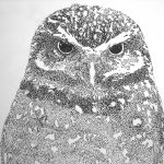 Black and white drawing of an owl.