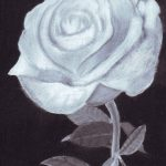 Black and white charcoal drawing of a rose.