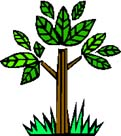 Hope and Wellness Club logo - a green tree